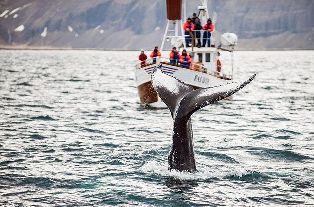Island putovanje