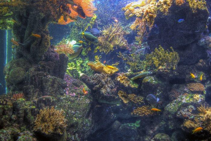 akvarijum u djenovi